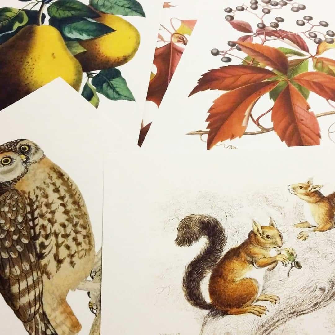 Jesienne Plakaty Grafiki Do Pobrania Montessori Mama